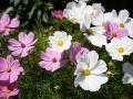 flowers20140714_3475.jpg