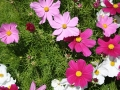 flowers320140714_3643.jpg