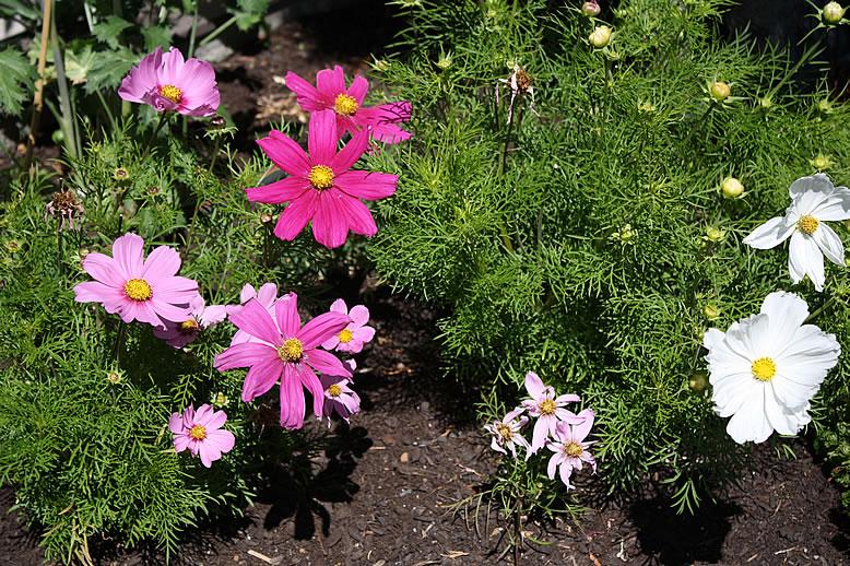 flowers20140714_3477.jpg