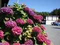flowers320140714_3638.jpg